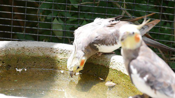 Water, Nature, Animal, Lake, Birds, White, Feather