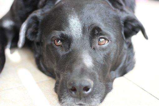 Dog, Black, Pet, Animal, Puppy, Cute