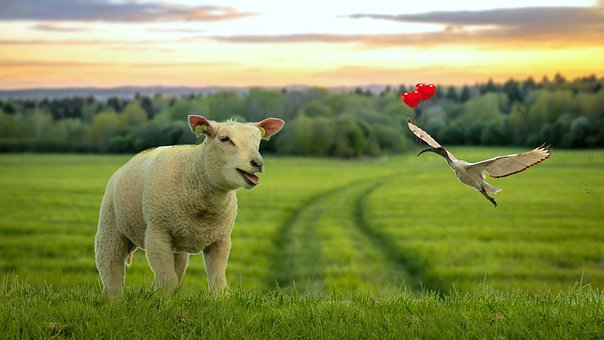 Friendship, Sheep, White Ibis, Cover, Story Child