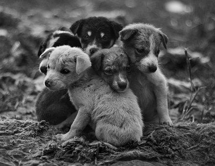 Street, Dog, Animal, Urban, Pet, Cute, Puppies, Puppy