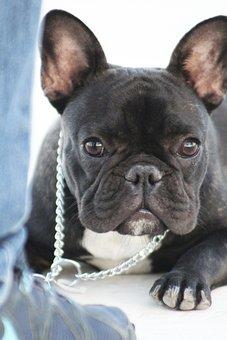 Big Eyes, Excited, Happy Dog, Dog Class, Dog Training