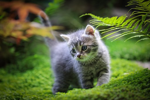 Kitten, Kitty, Cat, Pets, Feline, Animal, Cute, Pet