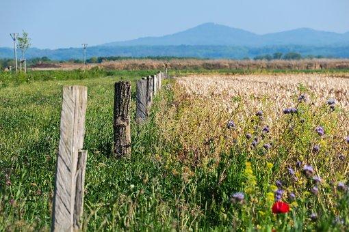 Fence Post, Flowers, Field, Wood Pile, Pile, Fence