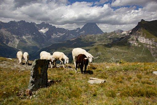 Flock, Mountain, Landscape, Mountains
