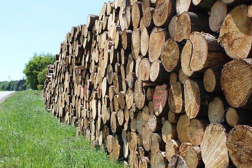 Wood, Strains, Tribe, Log, Forest