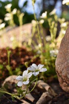 Stone, Flower, White, Green, Garden, Sky, Summer