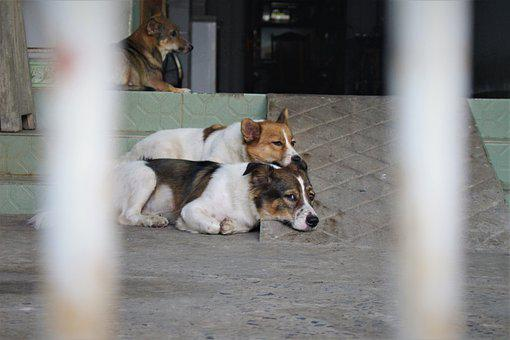 Dogs, Happy, Puppy, Pet, Cute, Animal, Look, Adorable
