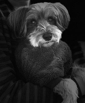 Human's Best Friend, Dog, Puppy, Love, Pets, Gray Puppy