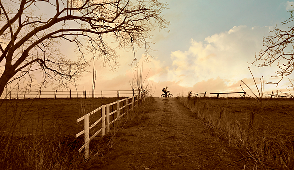 Landscape, Fence, Dike, Tree, Path, Cyclist, Rural