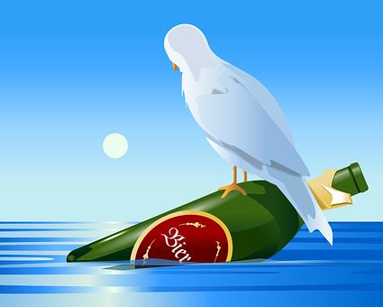 Bottle, Sea, Seagull, Bird, Castaway