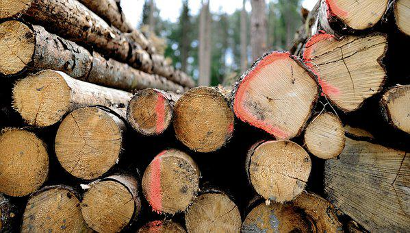 Wood, Firewood, Forest, Stack, Growing Stock