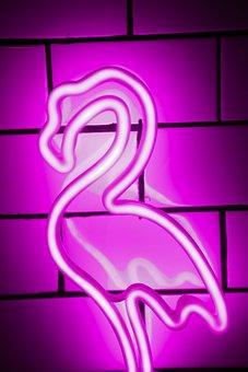 Brick, Stone, Neon, Flamingo, Lights, Nightlife, Club