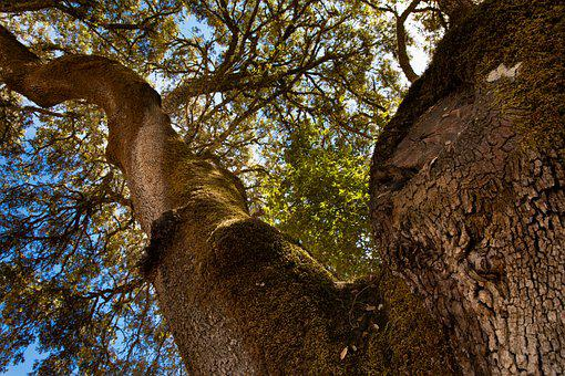 Tree, Leaves, The Land, Trunk, Moss, Landscape, Earth