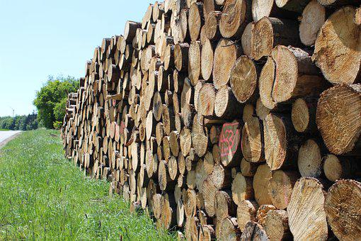 Wood, Strains, Tribe, Log, Forest, Forestry, Timber