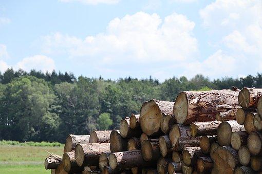 Wood, Forest, Waldsterben, Landscape