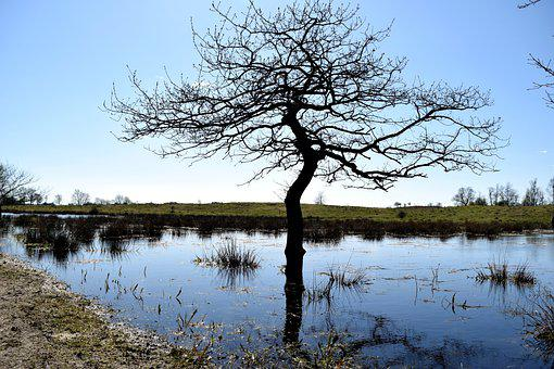 Foundation Of The Country, Waters, Tree