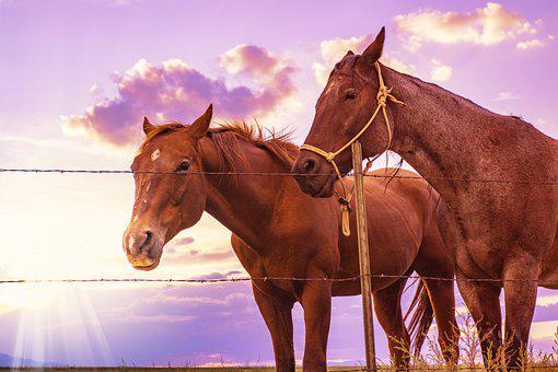 Horses, Sunset, Western, West, Chestnut, Animal, Cowboy