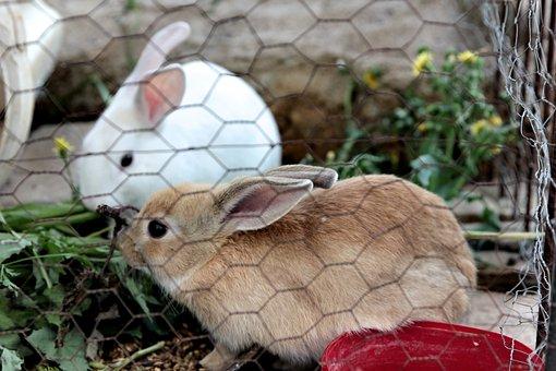 Rabbit, Rabbits, Furry, Cute, Animal, Easter, Baby