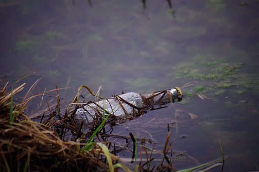Water, River, Bach, Bottle, Glass, Waste