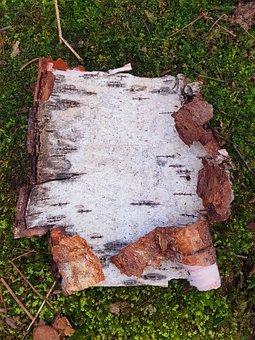 Frame, Nature, Bark, Tree, Birch, Scrapbooking, Spring