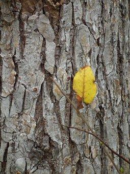 Tree, Bark, Leaf, Yellow, Autumn, Season, Nature, Trunk