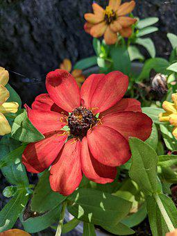 Red Flower, Blooms, Blooming, Garden, Plant, Gift