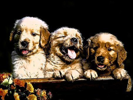 Golden Retriever, Puppy, Young, Dog, Mammal, Canine