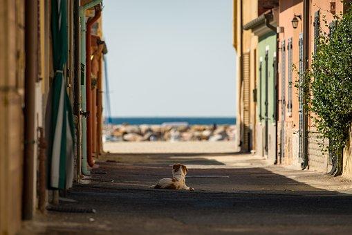 Street, Dog, Sea, Italy, City, Architecture, Animal