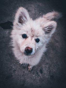 Dog, Cute, Car, Mammal, Sad, Sweet, Bed, Young