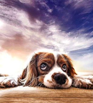 Dog, Puppy, Pet, Animal, Cute, Adorable