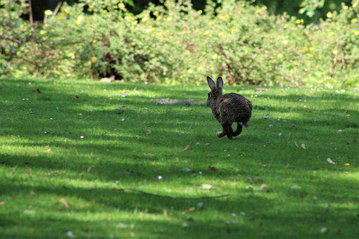 Hare, Rabbit, Easter, Animal, Cute, Easter Bunny