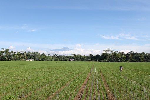 Field, Farmer, The Sky Is Blue, Mount