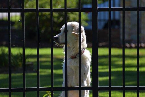 Guard Dog, Doggy, Companion, Trustworthy, Helpful