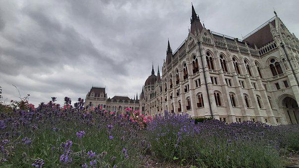 Hungary, Parliament, Garden, Flower, Purple, Overcast