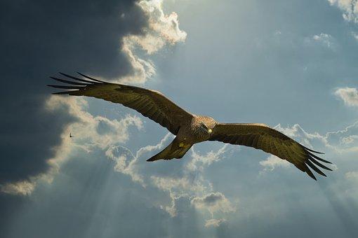 Milan, Clouds, Dramatic, Hunter, Bird Of Prey, Raptor