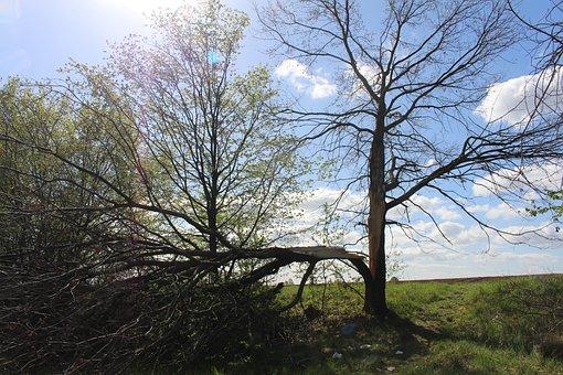 Separation, Mourning, Tree, Destruction, Lightning Weft