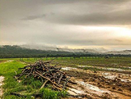 Farm, Rain, Mud, Clouds, Agriculture, Tomato, Farming