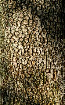 Tree Bark, Patterns, Texture, Grain, Cracked, Natural