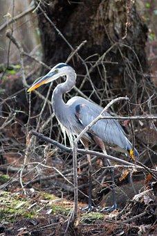Florida, Wildlife, Nature, Bird, Animal, Wild, Fauna