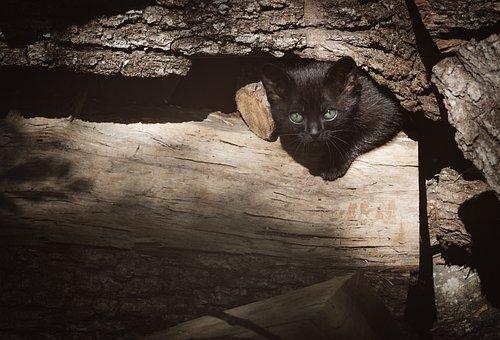 Cat, Nero, Wood, Hidden, Feline, Mammal, Burrow, Refuge
