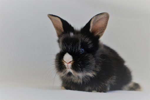Rabbit, Nager, Rodent, Hare, Cute, Sweet