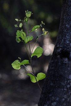 Green, Leaves, New Growth, Tree, Bark, Foliage, Plant