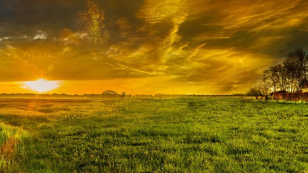Landscape, Nature, Forest, Sunset, Tree