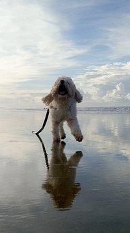 Dog, Animal, Pet, White, Puppy, Cute, Canine, Sheepdog