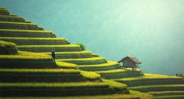 Agriculture, Asia, Cat, China, Cloud, Colorful