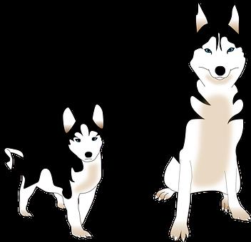 Dog, Siberian Husky, Puppy, Friend, Animal, Nordic