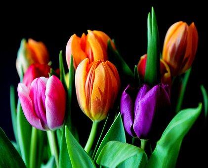 Flowers, Tulips, Bouquet, Cut Flowers, Colorful, Color