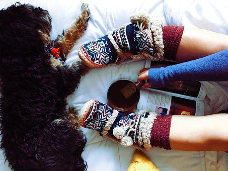 Dog, Pet, Furry, Animal, Tea, Drink, Cup, Warm, Slipper
