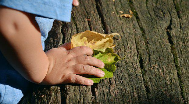 Child's Hand, Hand, Access, Feel, Experience Nature