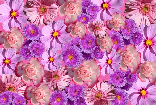 Flowers, Blossom, Bloom, Nature, Color, Purple, Pink